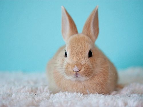 Kaninchen Plötzlicher Tod